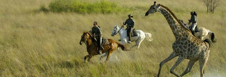 Timeless Africa Safaris 2021 Horse Riding Safari — African Safari