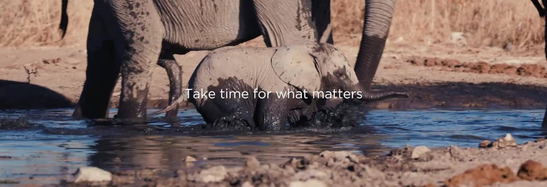Timeless Africa Safaris 2021 Ocean Safari — African Safari