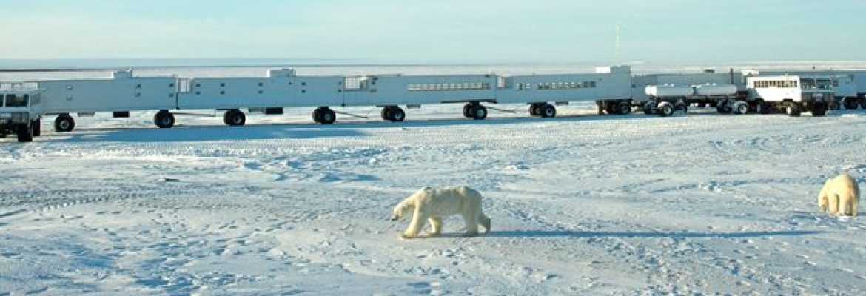 Amazing Journeys 2021, Churchill & Polar Bears — Kosher Vacations